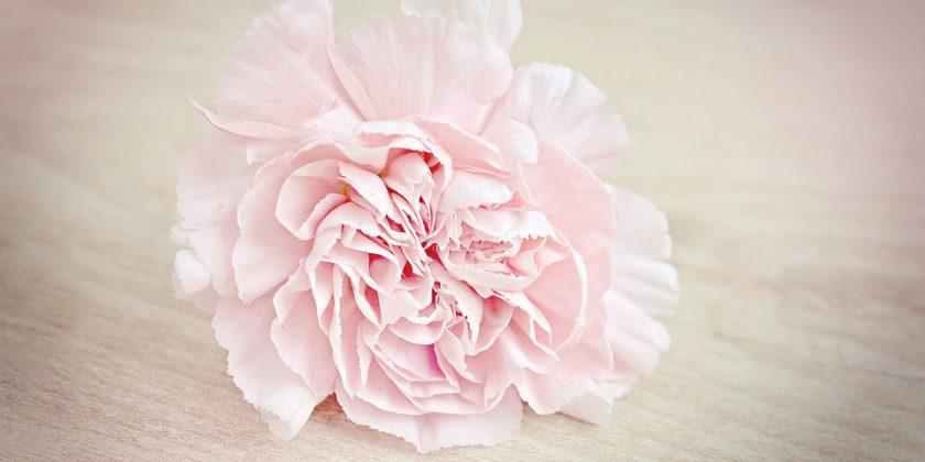 flower-1364746_960_720