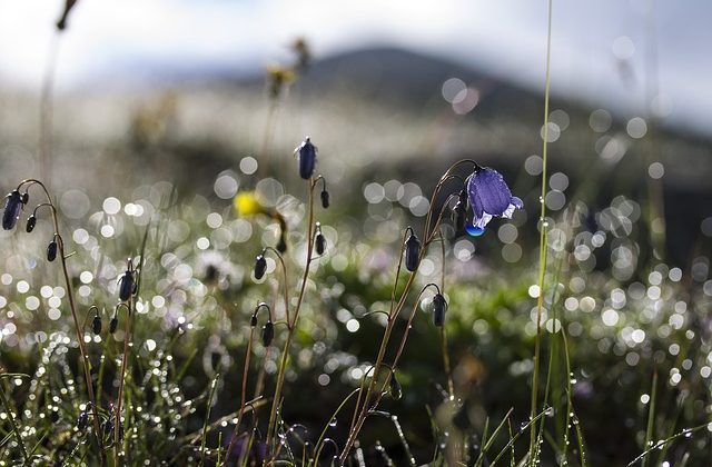 flowers-1830941_640
