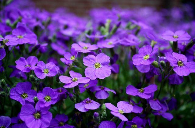 flowers-2233592_640