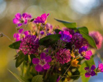flowers-2496071_640
