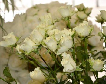 flowers-2663675_640