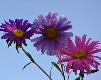 flowers-2667489_640