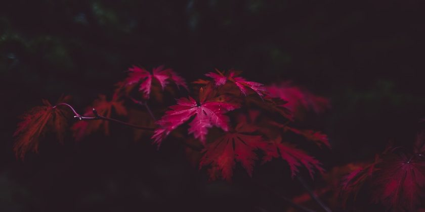 leaves-1031355_960_720