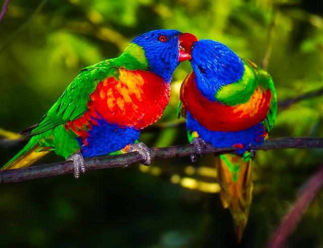 parrots-1973534_640