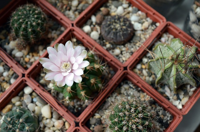 plants-in-pots-1536501_640