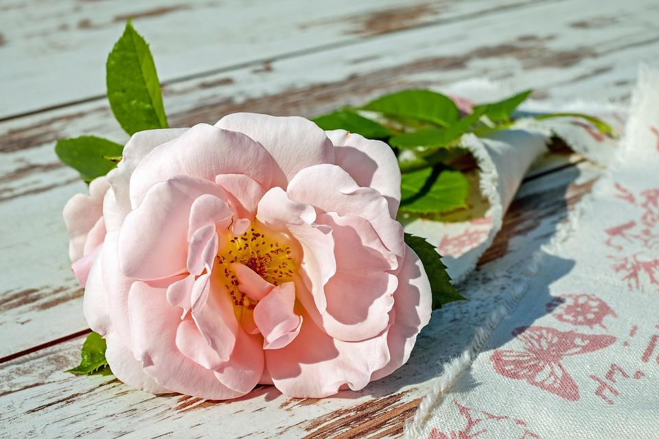 rose-2378156_960_720