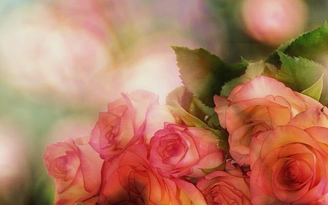 roses-3141486_640